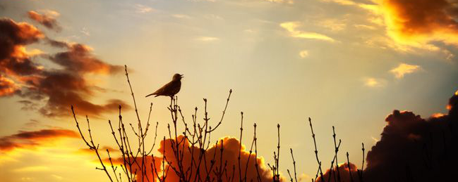 Bird-Chirps-On-Treen-Sunset.jpg.838x0_q80
