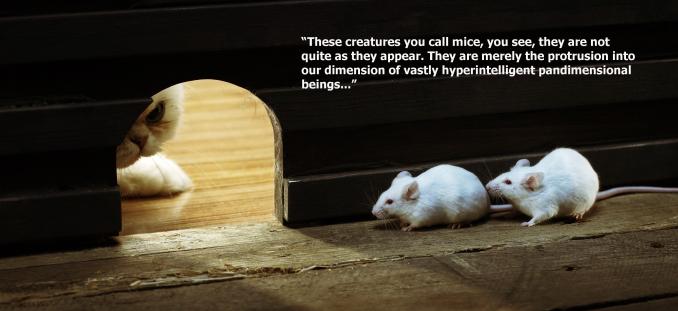 cat-white-mice2