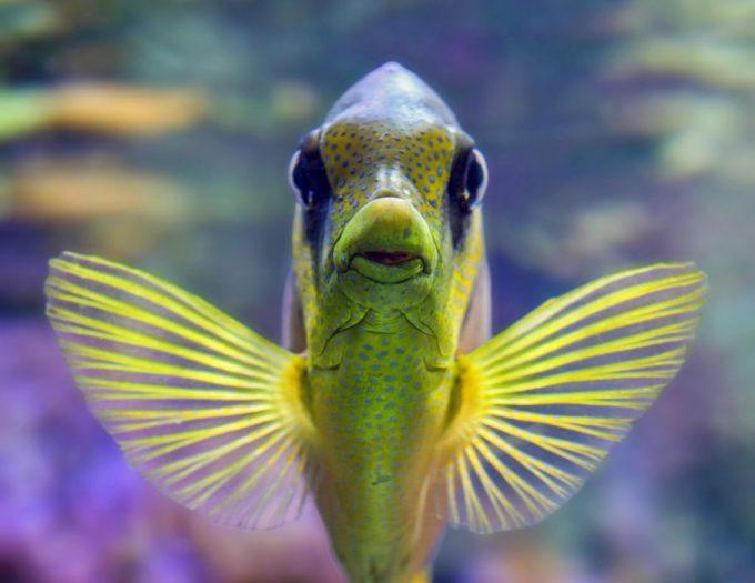 fish-3217631_1920-1024x791