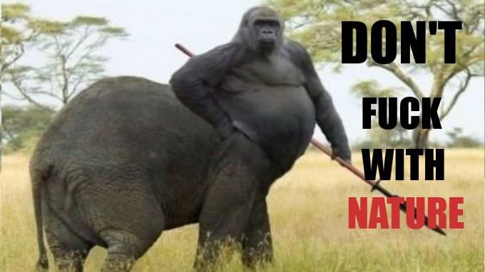Gorilla elephant Nature Fuck