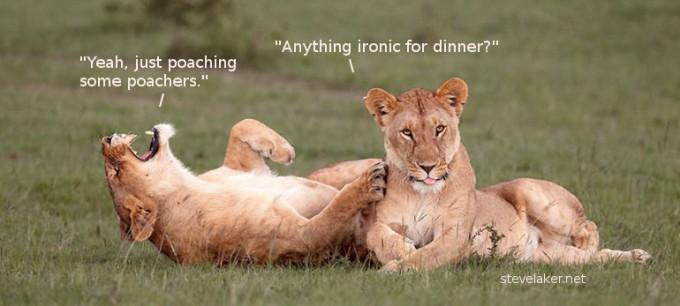 lions poaching2