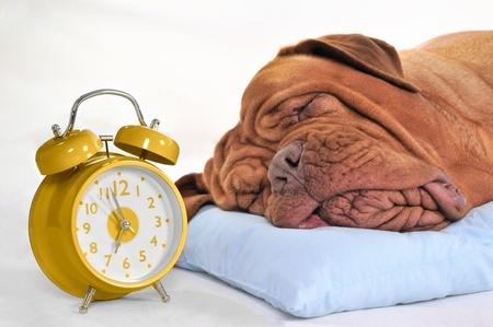 DogSleeping