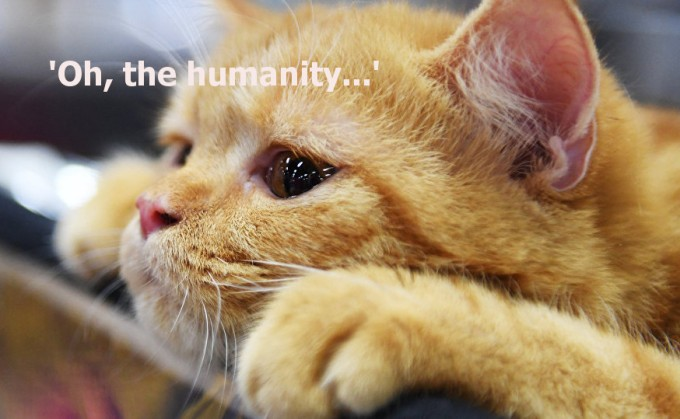 Ginger Cat Humanity