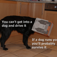 The differences of dogs and cars