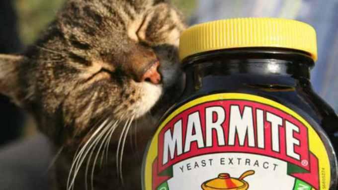 00cat_marmite-780x439