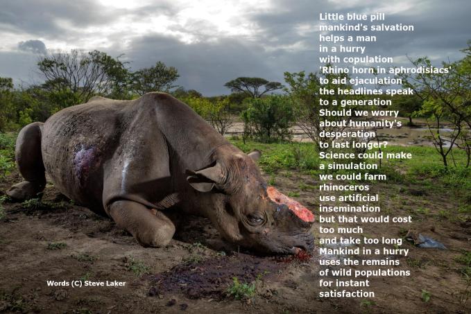 Dehorned Rhino Poem4