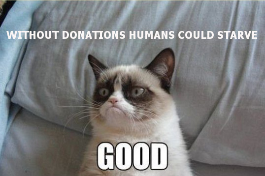 Grumpy cat donations