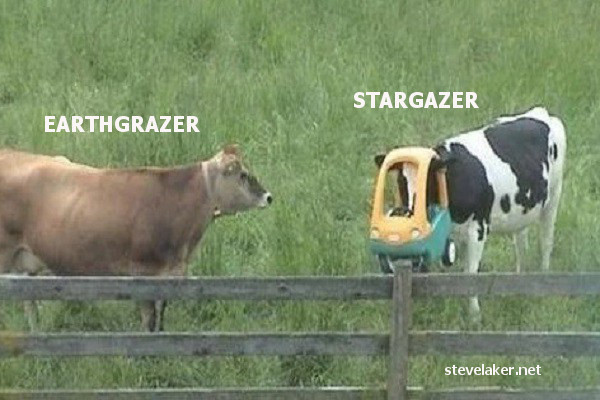 Cow Car StarGazer
