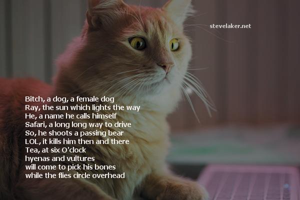 ginger cat-on-laptop poem2