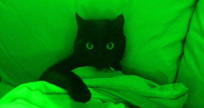 Cat in bed Green
